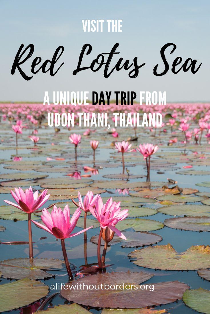 Red Lotus Sea, Udon Thani