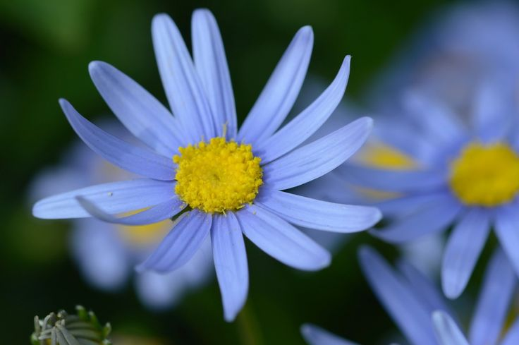 A blue flower is a central symbol of inspiration.