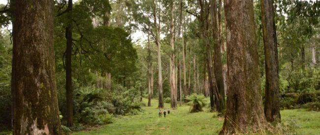 The Monda Track is a very picturesque track following various access roads and tracks, plus firebreaks, through the Black Range State Forest.