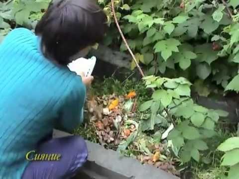 Сидераты на садовых участках