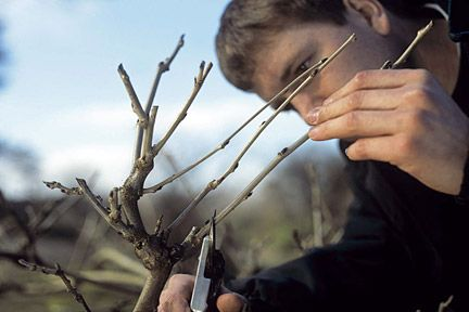 August is the best time to summer-prune wisteria, to encourage bud development for next year.