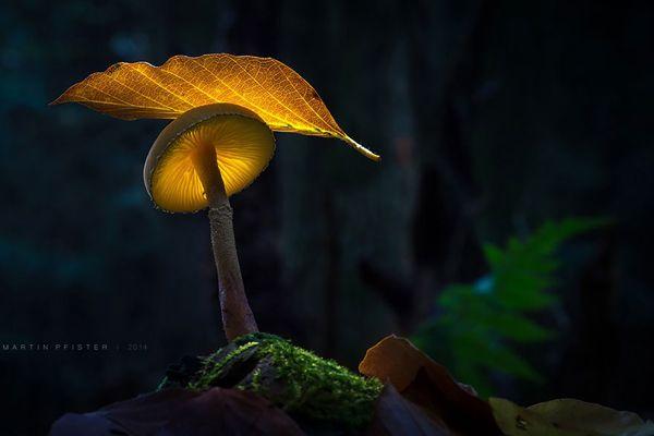 """""""Моя цель - создать что-то необычное и очаровать зрителя… возможно даже, перенести в другой мир"""". О сказочном мире грибов от Мартина Пфистера на сайте Photodzen.com #mushrooms #macro #photography #photodzen"""