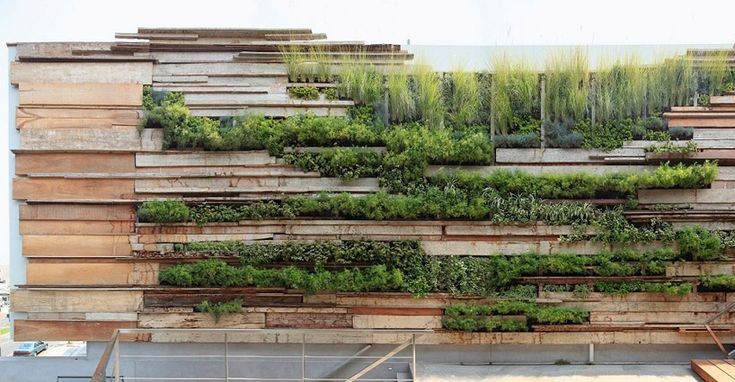 Green wall on recycled wood planks. Zentro Commercial and Office Building by Gonzalez Moix Arquitectura: