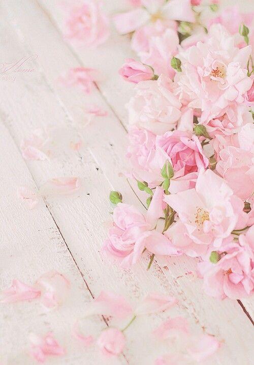 Bloom Some Beauty Flower Wallpaper Rose Wallpaper Flower