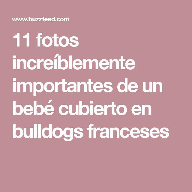 11 fotos increíblemente importantes de un bebé cubierto en bulldogs franceses