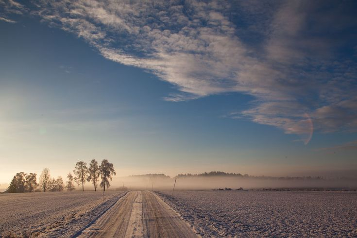 Field roald. Photo: John Einar Sandvand