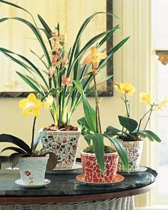 Decorative Pots and Planters