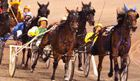 The Meadows Racetrack and Casino is a standardbred harness racing track and slot machine casino in North Strabane Township near Meadow Lands, just 5 miles north of Washington. Racing takes place yearound!