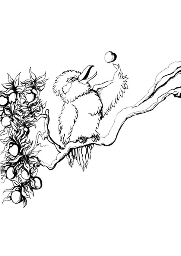 Free Online Kookaburra Colouring Page - Kids Activity Sheets: Animal Colouring Pages