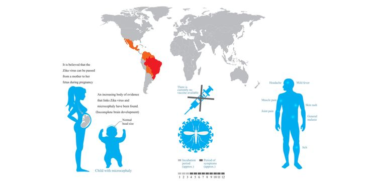 Background: Zika virus is a flavivirus related to yellow fever, West Nile virus, dengue fever and Japanese encephalitis. It was first discovered in a rhesus monkey in the Zika forest of Uganda in 1947. Until recently, outbreaks have been concentrated in Africa, Asia and the Pacific. Zika virus is a mosquito-borne virus transmitted primarily by …
