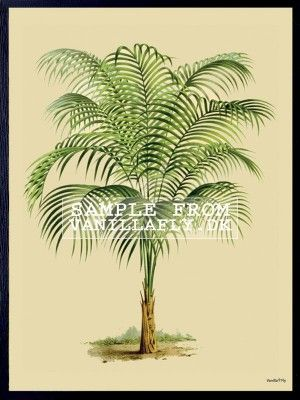 POSTER PALM TREE (3-PACK) #PSC90