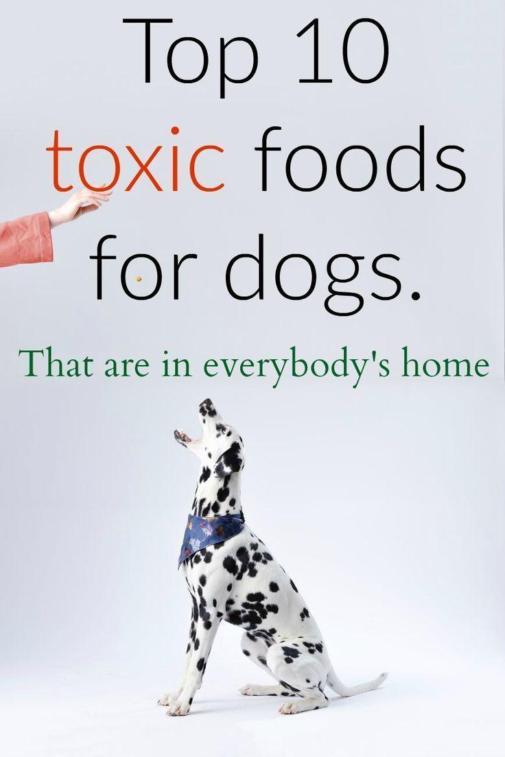 Top 10 Toxic Foods For Dogs Toxic Foods For Dogs Dog Food Recipes Dogs