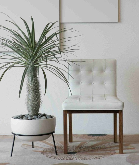 59 Best Mid Century Planters Images On Pinterest Herb