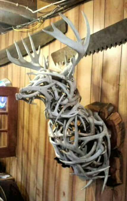 Deer antler deer mount