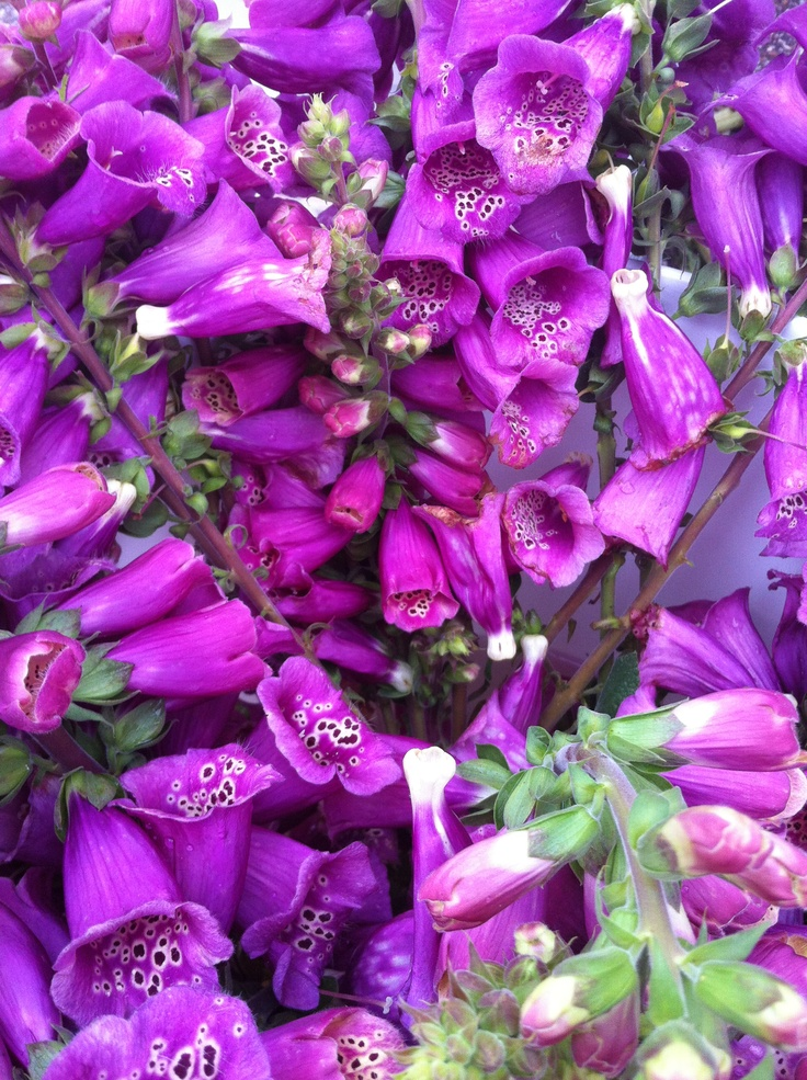 More pretty flowers at the market! - http://artemisinthecity.com