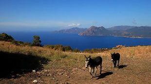 Découvrez le Golfe de Valinco en Corse - Actualités météo - MétéoCity