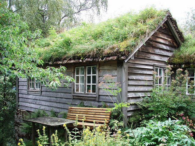 Moss and grass on the roof? Big fan. As long as I'm not paying to insure said roof.