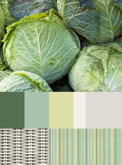 Cabbage, our bohemian resource of health