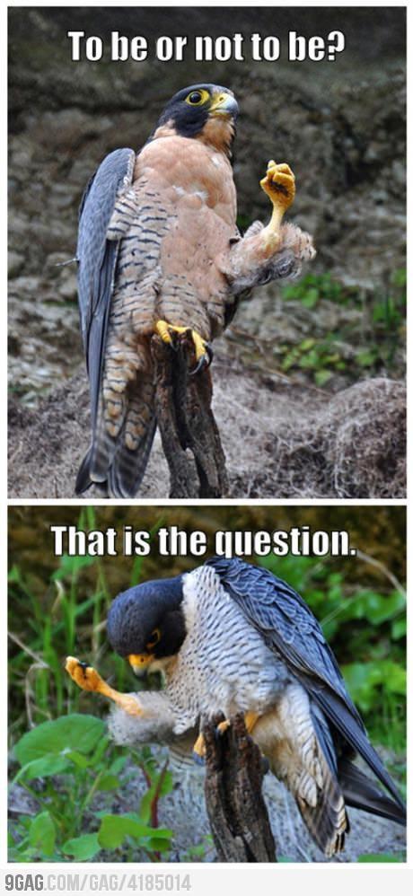 Falcon Shakespeare