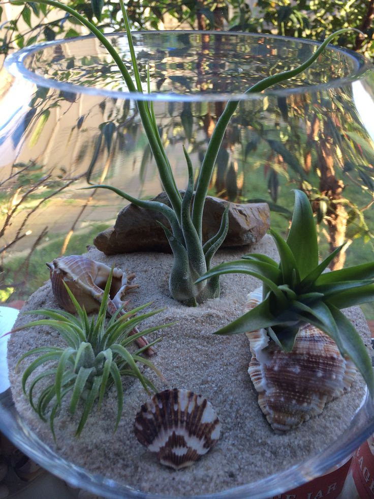 air plant sand terrariums by the planter pod. facebook.com/theplanterpod