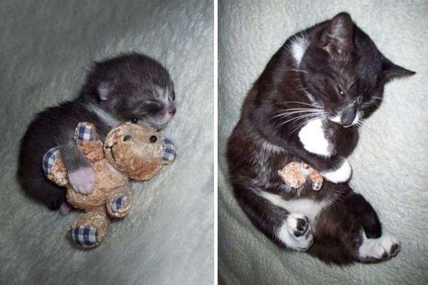【激かわ注意】ぬいぐるみと逆転!? 赤ちゃんの頃と今を並べた犬・ネコの画像8選