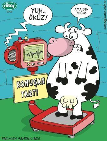sütaş karikatür