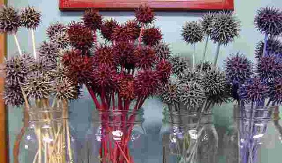 Sweet Gum 'Flowers' Nature's little prickly by IdleWildCreations, $8.50