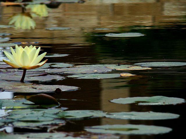 imitando a Monet | Flickr: Intercambio de fotos