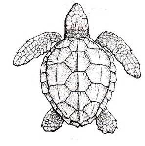 Sea turtle graphics - Yahoo Image Search Results