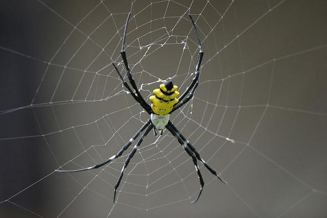 Spider back                                                                                                                                                           Spider back                                                                         ..