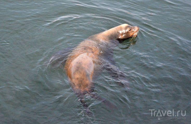 Где посмотреть морских львов и купить рыбы в Сан-Диего
