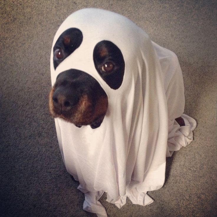 The 25+ best Dog ghost costume ideas on Pinterest | Can ...