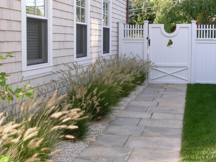 Fountain Grasses(Pennisetum), with their bottlebrush plumes, soften the walkway of this lovely coastal cottage home in in Westport, Connecticutt. Photography courtesy of Janice Parker Landscape Architects. Gardenista