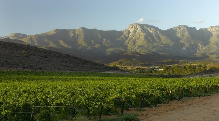 Robertson is a town in the Western Cape Province of South Africa known as the valley of wine and roses, at the heart of the worlds longest wine route - Route 62.