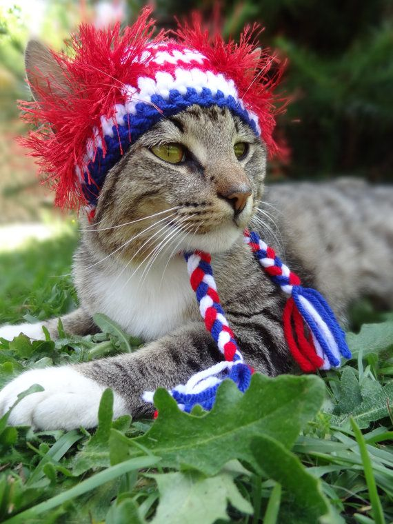 Cat and Dog Hat Costume - July 4th Fourth of July - The American Wackadoodle Hat for Cats and Dogs