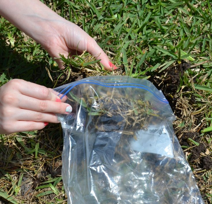 Diagnosing Lawn Problems | Harris County Horticulture Blog