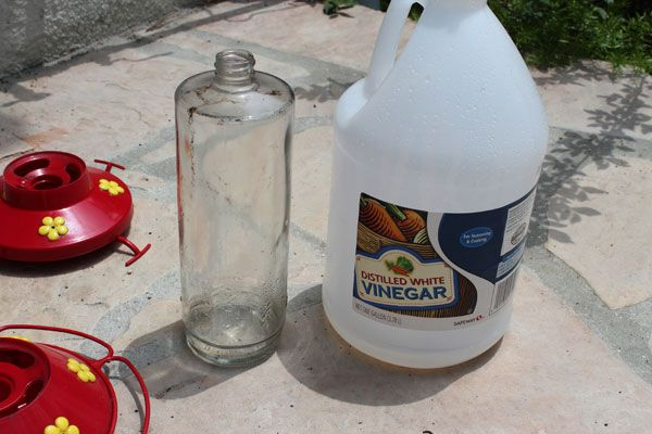 cleaning your hummingbird feeder with vinegar/ plus more tips on things you should know before cleaning your feeder.