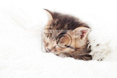 Fotobehang kleine kitten slapen op een witte sprei