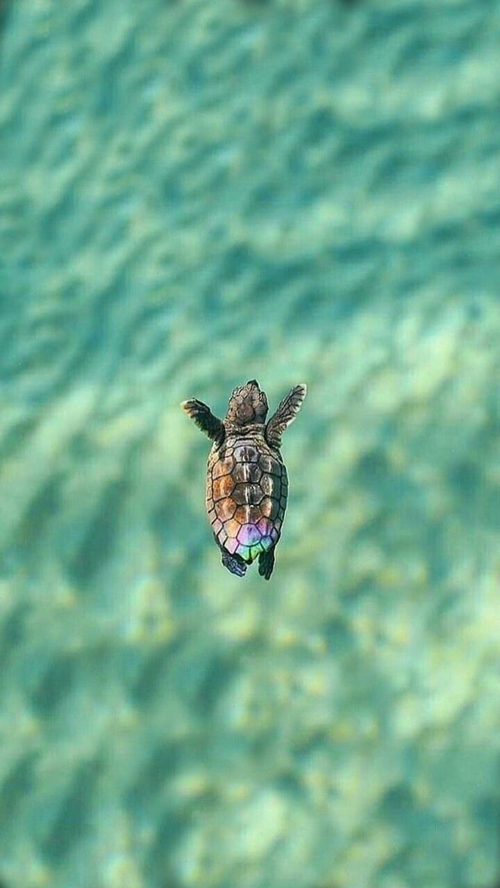 Wallpaper Iphone Android Background Followformore Sea Turtle
