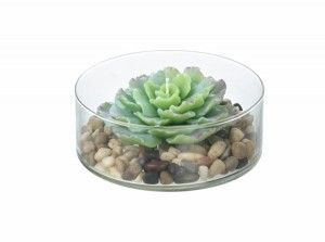 Cacti Candle In Glass Bowl With Stones – Parlane International : This gorgeous cacti candle comes with it's own glass dish and pebbles to sit on. Great as a decorative piece but would look lovely lit on a dark evening. Dimensions: (Diam) 150mm (H) 50mm. Buy Online ; http://www.thegardenrose.co.uk/buy-online/cacti-candle-glass-bowl-stones-parlane-international/