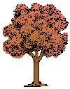 Horoscope celtique, gauloise, découvrez votre arbre ptotecteur selon votre de naissance, index, histoire des celtes, des druides