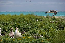 Albatross birds at Northwest Hawaiian Islands National Monument, Midway Atoll, Papahānaumokuākea es un sitio formado por un conjunto de isletas y atolones de escasa altura y el océano que los rodea. Situado a unos 250 km al noroeste del archipiélago principal de las islas Hawái, se extiende por una superficie de 1931 km. Para los hawaianos, este sitio tiene un significado cosmológico, ya que encarna el vínculo de parentesco entre los hombres y la naturaleza, cuna de la vida y tierra de…