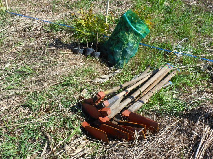 ≪Present Tree in 宮古≫第1回植樹イベント_20121008 鍬と苗木