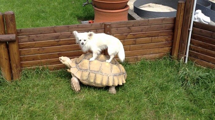 30 Animals Enjoying a Free Ride on The Back Of Other Animals