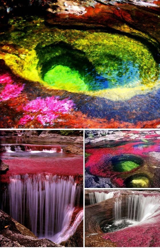 """Canõ Cristales - Colombia.  The river is commonly called """"The River of Five Colors"""" and """"The Liquid Rainbow"""" due to the algae produced colors like red, yellow, green and blue at the bottom of the river."""