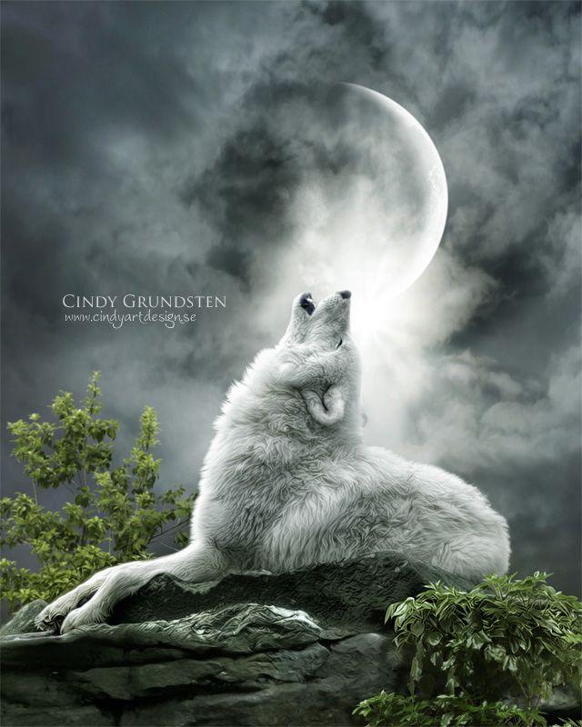 wolves art | White Wolf: Enchanted Fantasy Wolf Digital Art of Cindy Grundsten