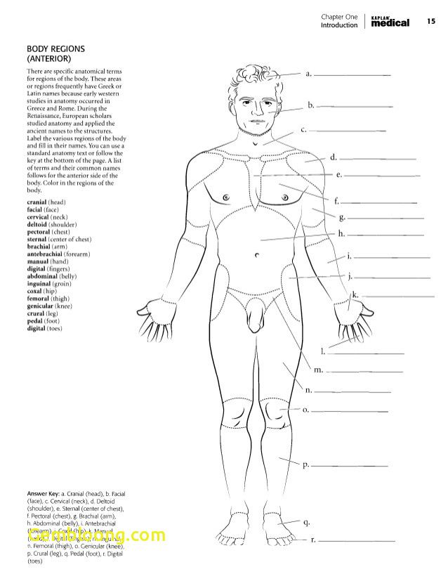 - 68 Luxury Stock Of Anatomy And Physiology Coloring Workbook Answer Key