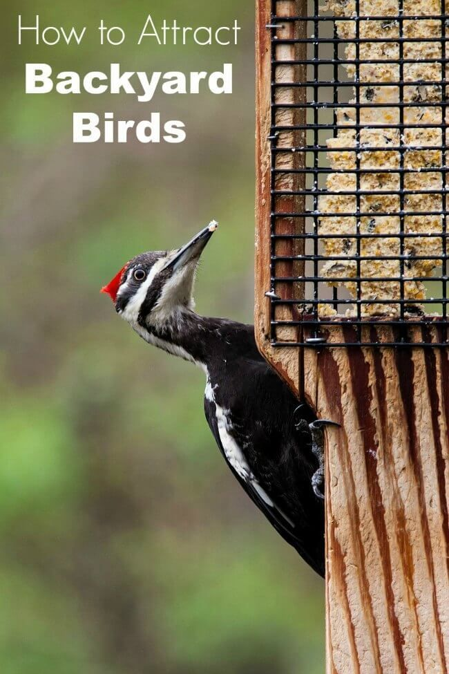How to Attract Birds to Your Yard -5 ways to make your yard more attractive to birds