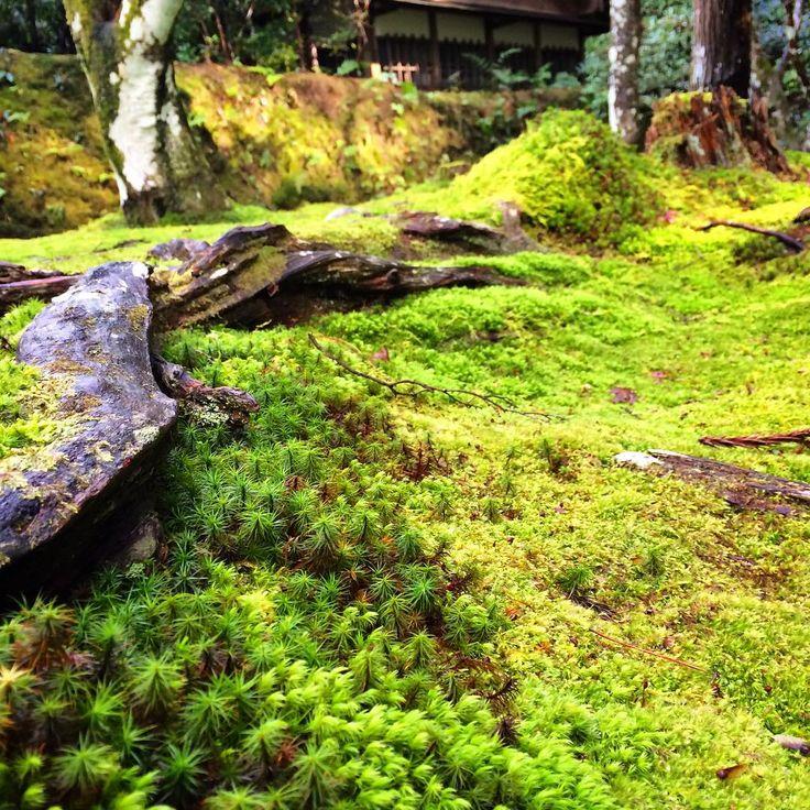 法然院〜 雨上がり 幽玄な美しさにうっとり〜♡ #法然院 #苔 #寺 #緑 #庭 #美しい #京都 #Beautiful #Honen #Moss #Temple #green #court #kyoto