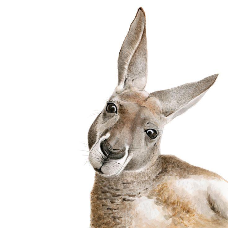 Kangaroo Art Print in 2020 | Kangaroo, Kangaroo drawing ...